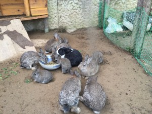 八色の森 ウサギ②