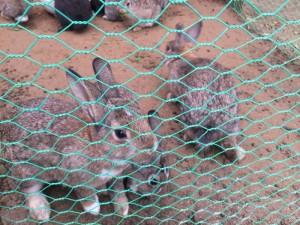 八色の森 ウサギ①