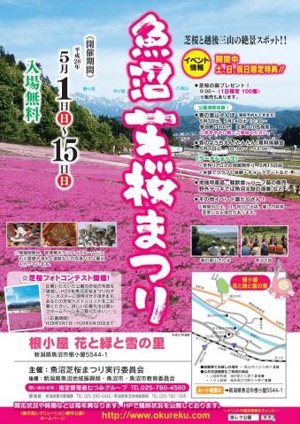 ◆魚沼芝桜まつりJPEG